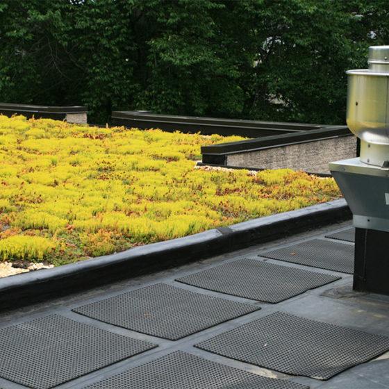Réalisation d'une toiture verte en Belgique